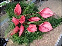 www.floristic.ru - Флористика. Robert Koene - Роберт КУнэ