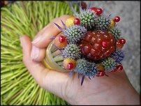 www.floristic.ru - Флористика. Июнь-Июль  - 2011 - Гламелия