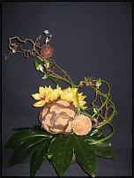 www.floristic.ru - Флористика. Рогоз широколистный (Typha latifolia).