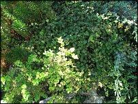 www.floristic.ru - Флористика. Что должен знать и уметь ландшафтный дизайнер?
