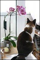 www.floristic.ru - Флористика. О животных