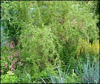 www.floristic.ru - Флористика. сад для флористики