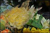 www.floristic.ru - Флористика. Способ скелетирования (или оскелечивания) листьев