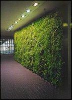www.floristic.ru - Флористика. Вертикальное озеленение