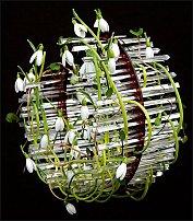 www.floristic.ru - Флористика. Ulrich Stelzer (Ульрих Штельцер)