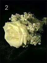 www.floristic.ru - Флористика. Ноябрь-декабрь - 2011