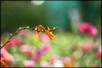 www.floristic.ru - Флористика. Фотография для флористов