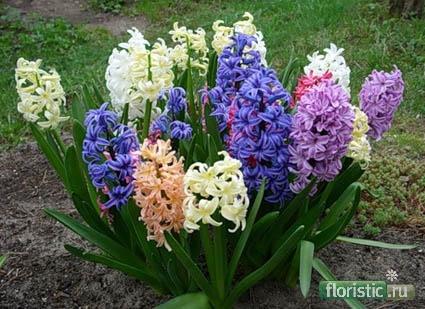 Цветы для повышения сексапильности