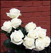 www.floristic.ru - Флористика. Роза