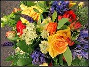 www.floristic.ru - Флористика. Астранция (Astrantia)