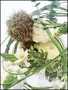 www.floristic.ru - Флористика. Птицемлечник, Орнитогалум (Ornitogalum)