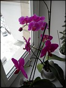 www.floristic.ru - Флористика. Подоконник флориста....или что у флориста на подоконнике!