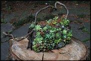 www.floristic.ru - Флористика. Суккуле́нты (Succulentus)