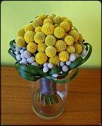 www.floristic.ru - Флористика. Craspedia globosa - Краспедия шаровидная