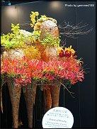 www.floristic.ru - Флористика. 17-ый Кубок Тайваня по флористике - 2010 год