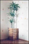 www.floristic.ru - Флористика. хобби моего мужа