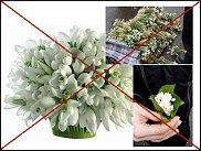 www.floristic.ru - Флористика. Подснежник (Galanthus)