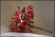 www.floristic.ru - Флористика. Глориоза
