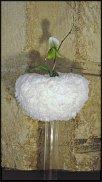 www.floristic.ru - Флористика. Юко Такаги (Yuko Takagi)