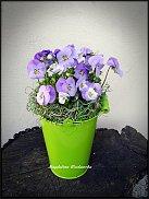 www.floristic.ru - Флористика. Виола. Анютины глазки.