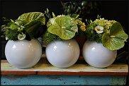 www.floristic.ru - Флористика. Анту́риум (Anthúrium)