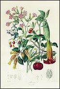 www.floristic.ru - Флористика. Флористика в искусстве