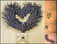 www.floristic.ru - Флористика. Лаванда (Lavandula)