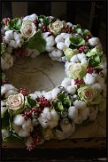 www.floristic.ru - Флористика. Хлопок (Gossypium)