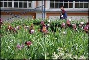www.floristic.ru - Флористика. Озеленение территорий православных комплексов