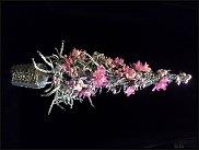 www.floristic.ru - Флористика. Моя Ёлка