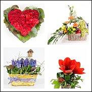 www.floristic.ru - Флористика. Ищу. Прекрасный флорист в помощь