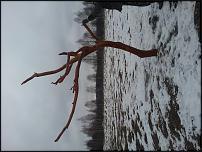 www.floristic.ru - Флористика. Предлагается стилизованное дерево из дуба