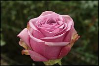www.floristic.ru - Флористика. Цветы мелким и крупным оптом из Колумбии.