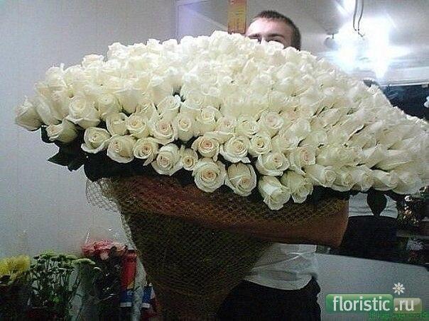 101 роза фото 60 см