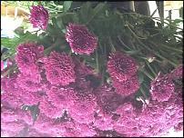 www.floristic.ru - Флористика. Штеф Адрианссенс в Екатеринбурге.