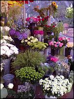 "www.floristic.ru - Флористика. ""Цветочные"" облики столиц и других городов мира"