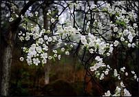 "www.floristic.ru - Флористика. Школа ""Мажорель"" (Украина, Киев)"