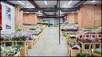 www.floristic.ru - Флористика. Компания «Цветы от Мачелюка» – это цветочный Cash & Carry в самом центре Москвы.