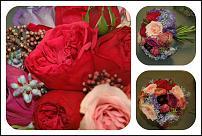 www.floristic.ru - Флористика. Ищу позитивных людей для сотрудничества