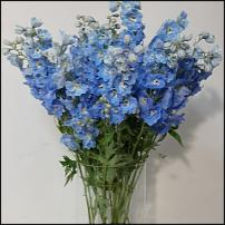 "www.floristic.ru - Флористика. ""April Flowers"" Израильский склад цветов."