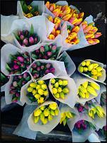 www.floristic.ru - Флористика. Тюльпаны оптом 2016