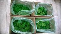 www.floristic.ru - Флористика. Стабилизированный мох ягель