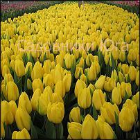 www.floristic.ru - Флористика. Оптовые поставки цветов Краснодарского края