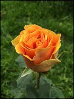 www.floristic.ru - Флористика. Цветы из Эквадора от Эквадорской компании. Надёжно!