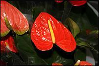 www.floristic.ru - Флористика. Цветочный аукцион