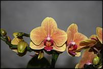 www.floristic.ru - Флористика. Юницветика - Свежие ЦВЕТЫ ОПТОМ и ВЫГОДНЫЕ цены