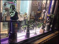 www.floristic.ru - Флористика. Продам готовый бизнес