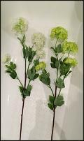 www.floristic.ru - Флористика. Вибурнум искусственный,калина бульдонеж