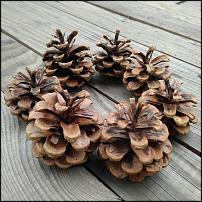 www.floristic.ru - Флористика. Природные материалы для флористики