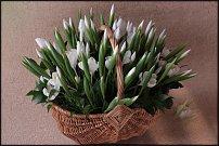 www.floristic.ru - Флористика. Ирисы